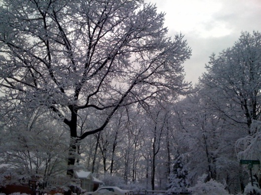 A picture of snowy trees